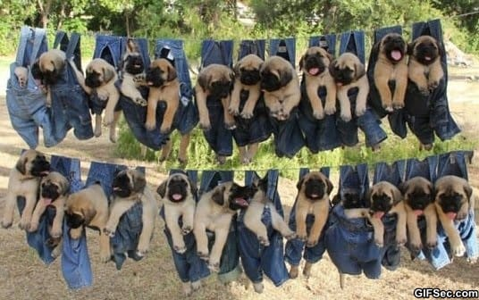 funny-pictures-just-hanging-around