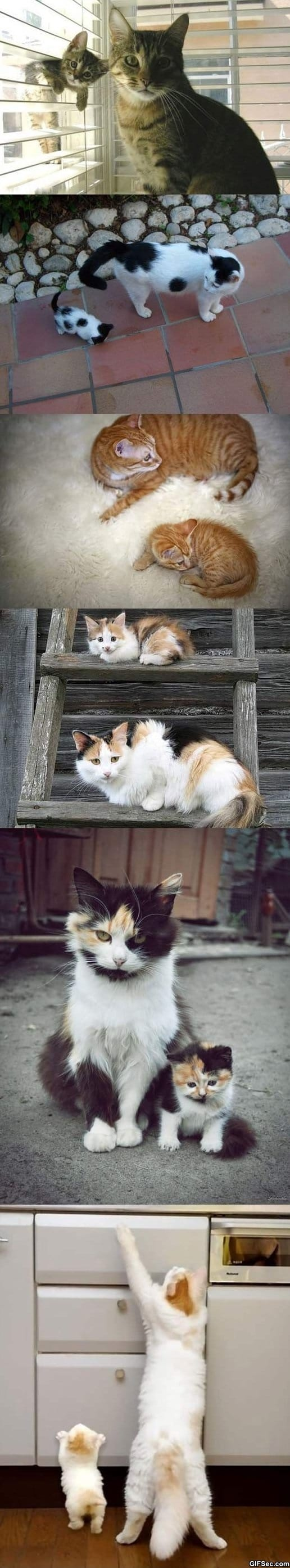 funny-pictures-like-parents-like-kittens