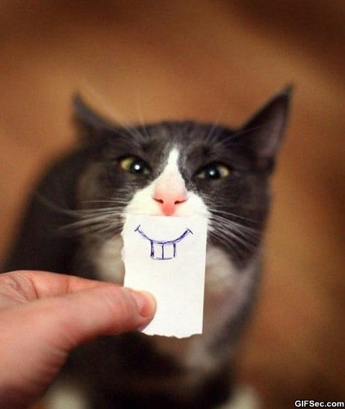 funny-pictures-smiley-cat