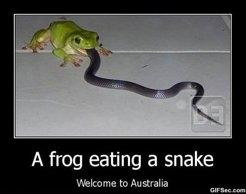 funny-pictures-welcome-to-australia