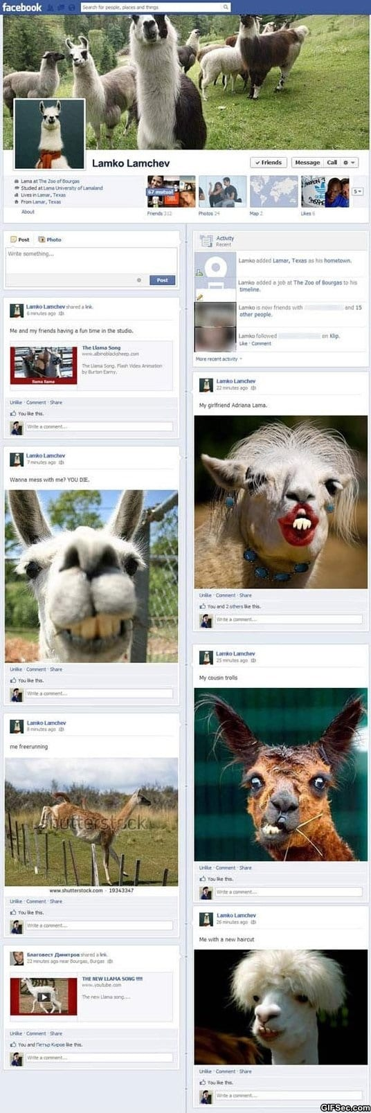 funny-pictures-llamas-on-facebook