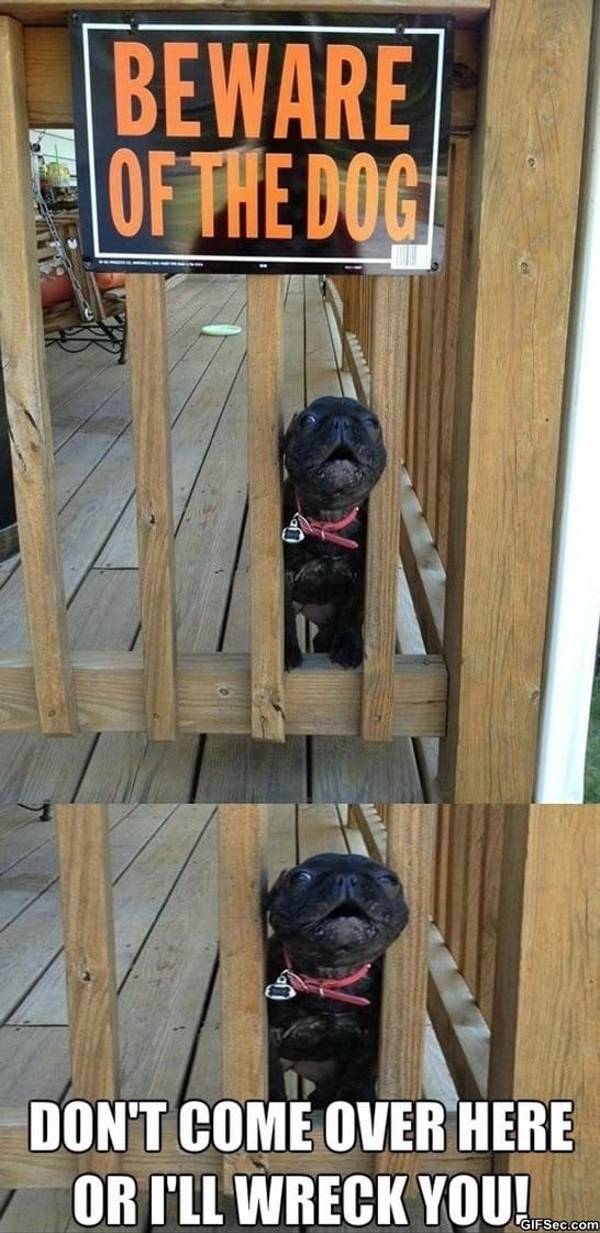 funny-pictures-beware-of-the-dog