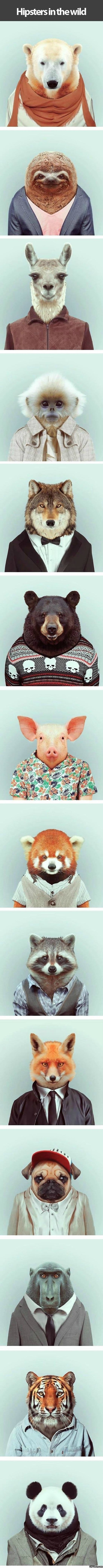 funny-pictures-hipster-animals