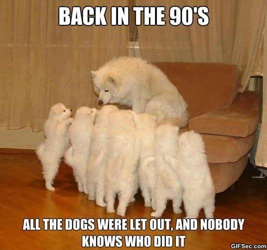 funny-storytelling-dog