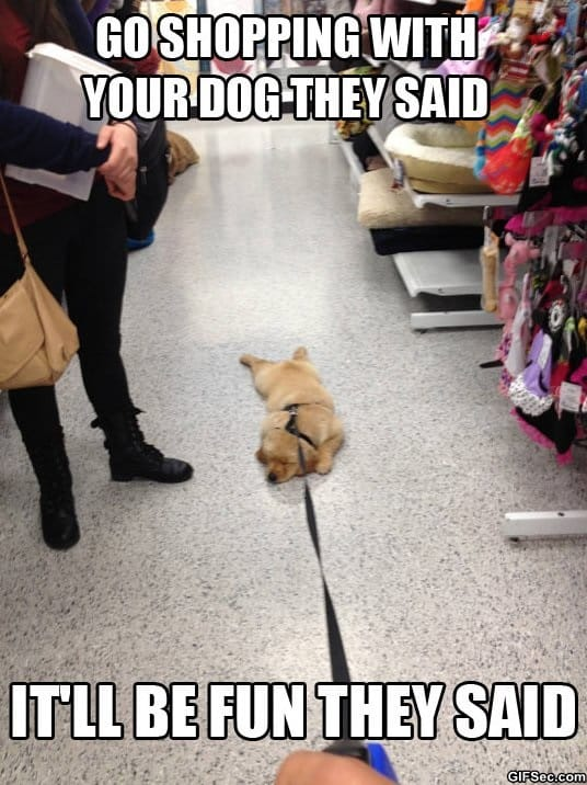 going-shopping-with-your-dog