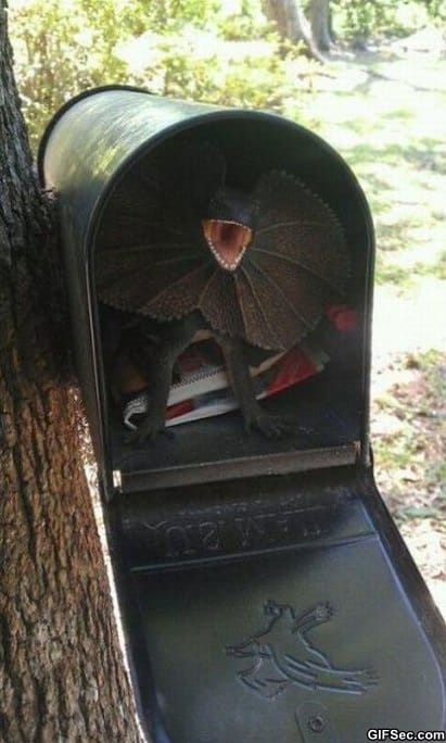 how-to-scare-your-mailman