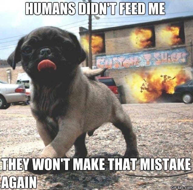 humans-didnt-feed-me