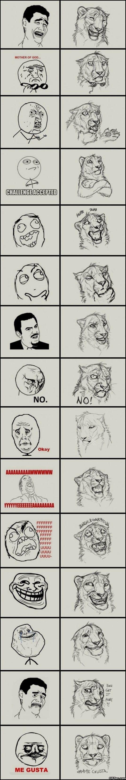 jungle-memes
