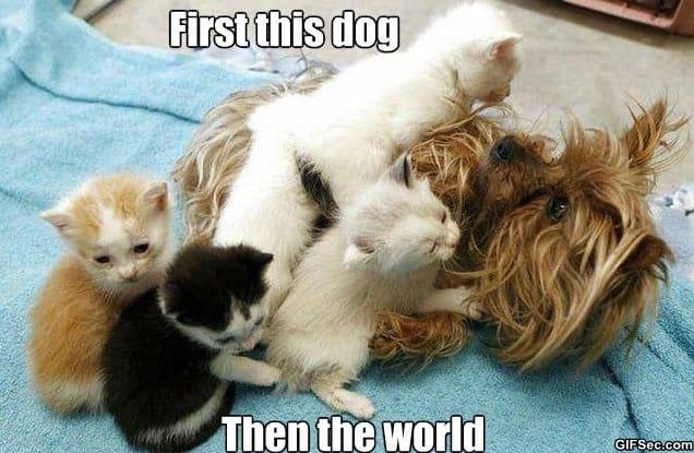 kittens-taking-over-the-world