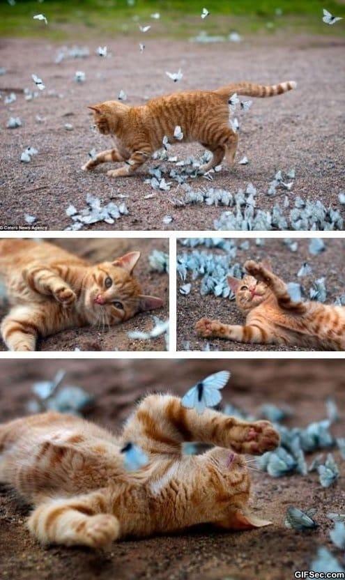 lol-basking-in-butterflies