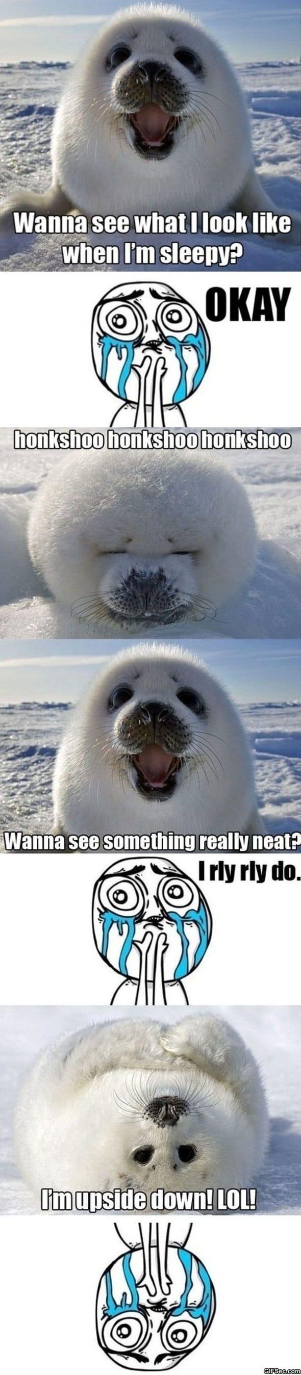 lol-cute