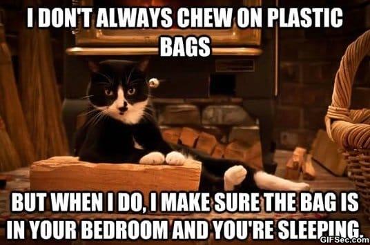 lol-damn-cats