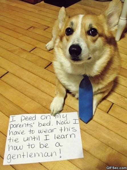 lol-gentleman-dog