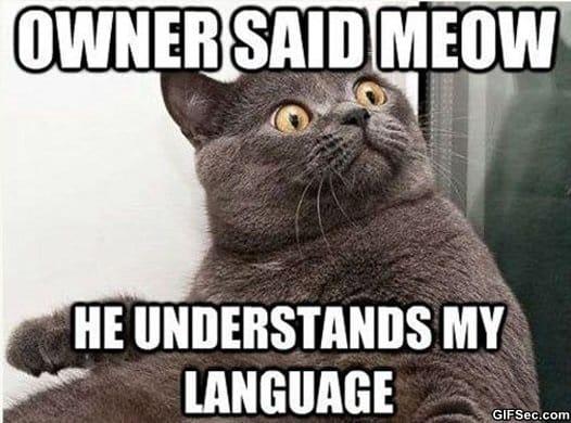 lol-meow