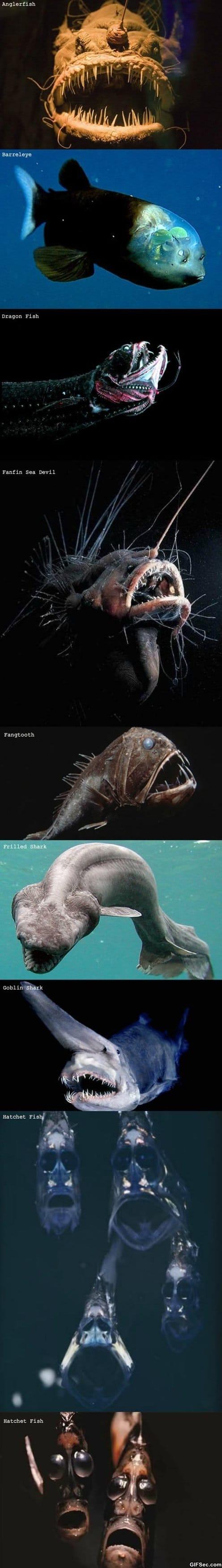 lol-strange-creatures-of-the-sea