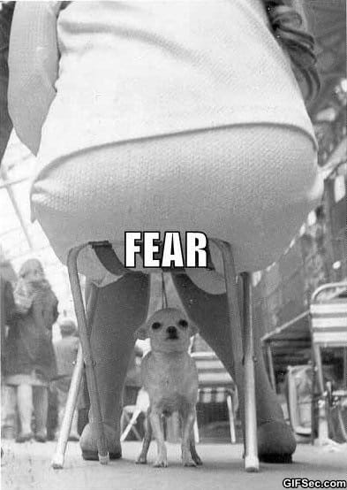 lol-the-face-of-fear