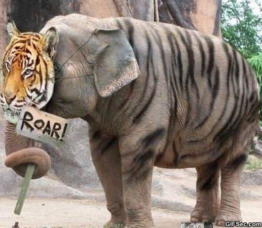 lol-trust-me-im-a-tiger