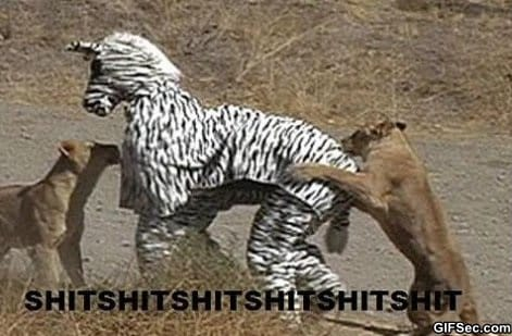 lol-why-dressing-up-as-a-zebra-is-a-bad-idea