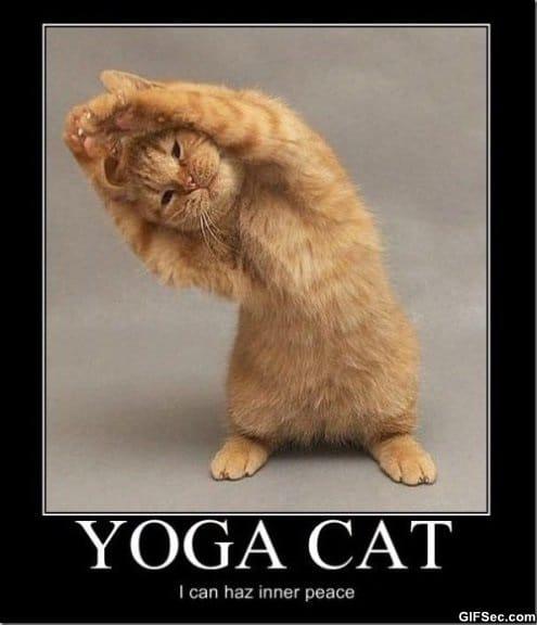 lol-yoga-cat