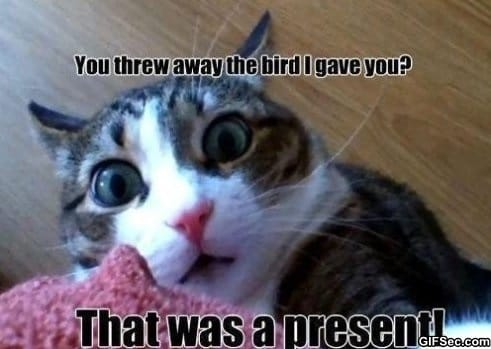 LOLCats 1 meme lol humor funny pictures funny photos funny
