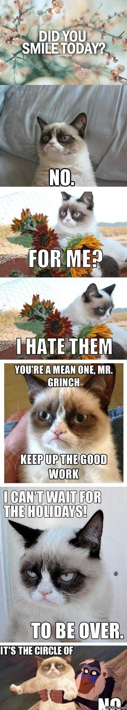meme-best-of-grumpy-cat