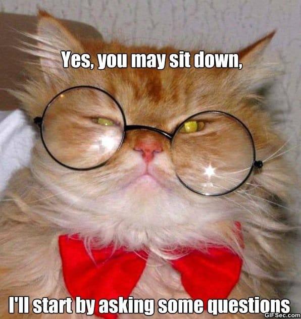 meme-cat-interview