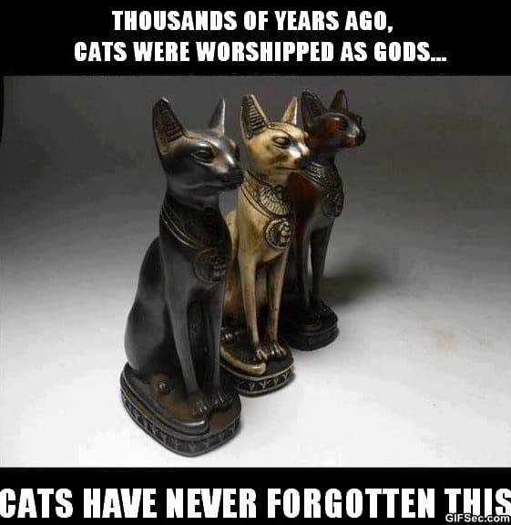 meme-cats