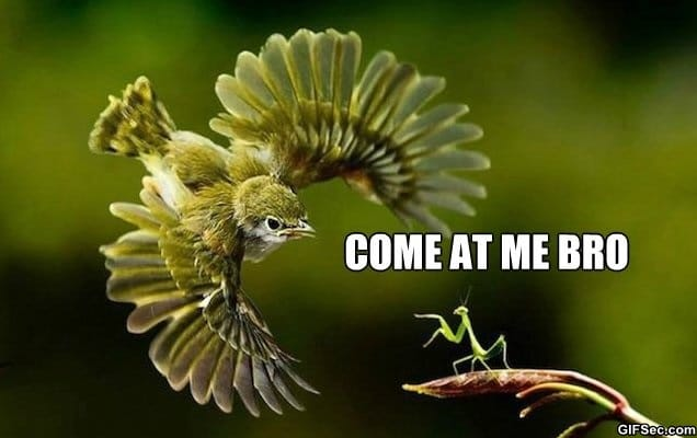 meme-come-at-me-bro