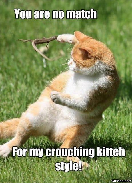 meme-crouching-kitteh
