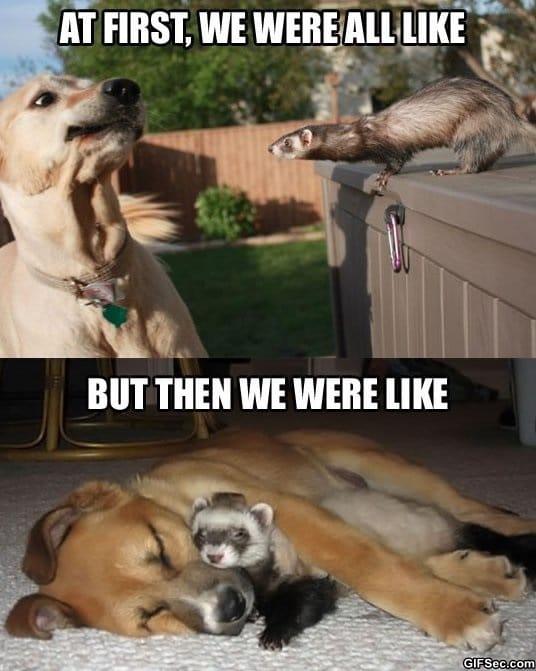 meme-dog-meets-ferret