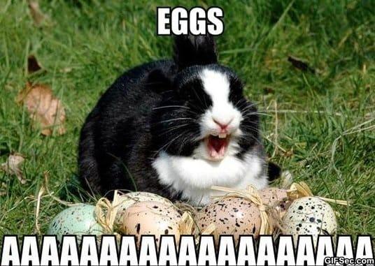meme-eggs