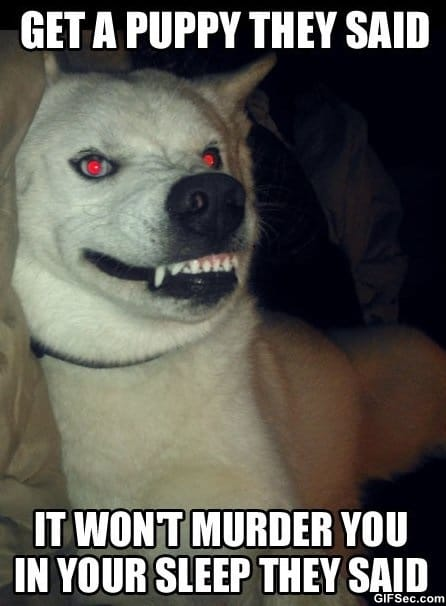 meme-evil-puppy