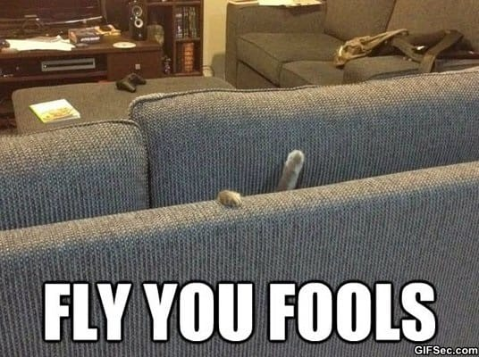 meme-fools