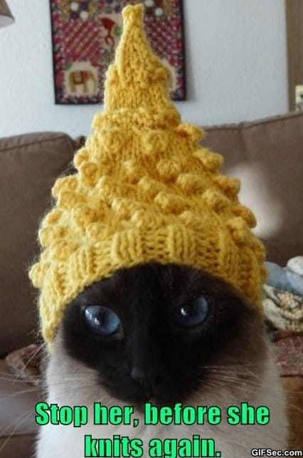 meme-funny-cat