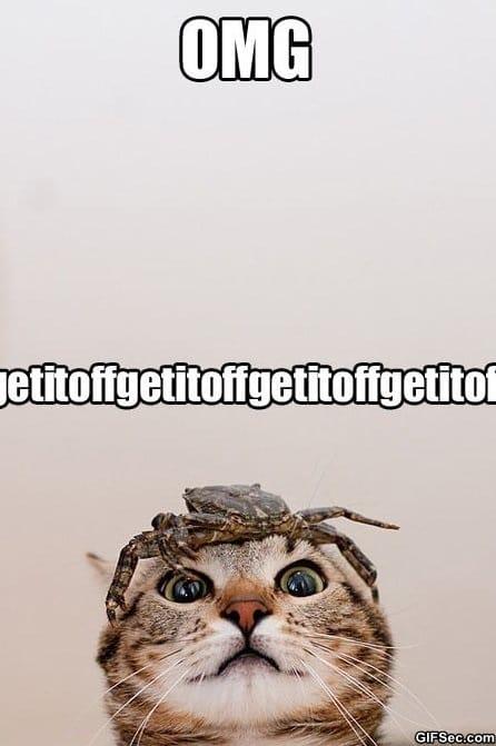 meme-get-it-off