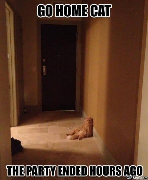 meme-go-home-cat