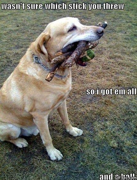 meme-good-dog