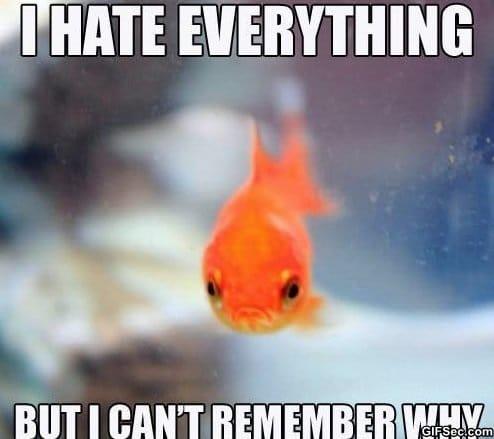 Funny fish memes - photo#5