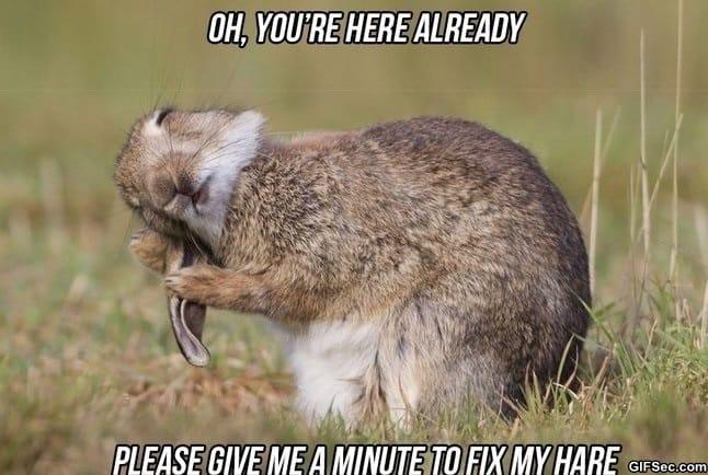 meme-hare-problems