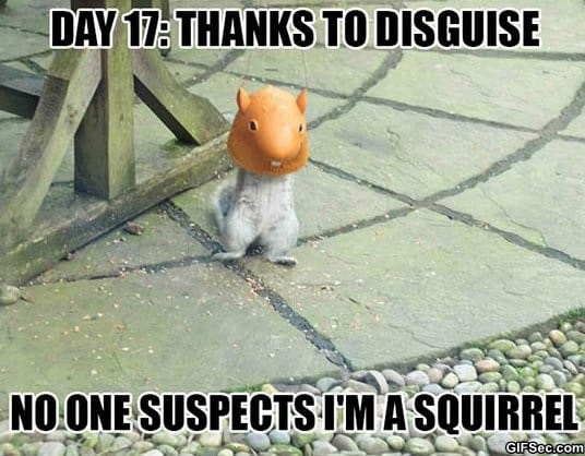 meme-infiltrated-squirrel