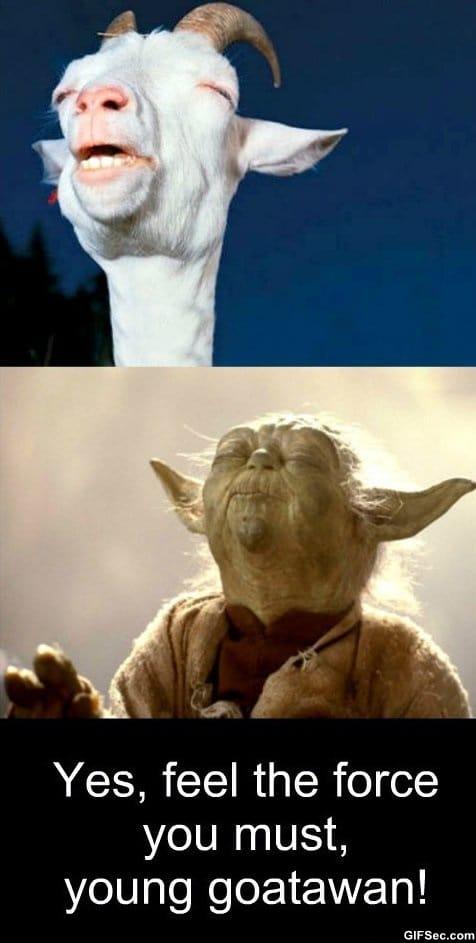 meme-meditation-level-goatawan