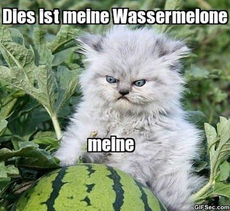 meme-meine