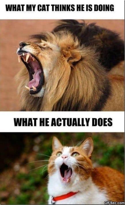 meme-my-cat