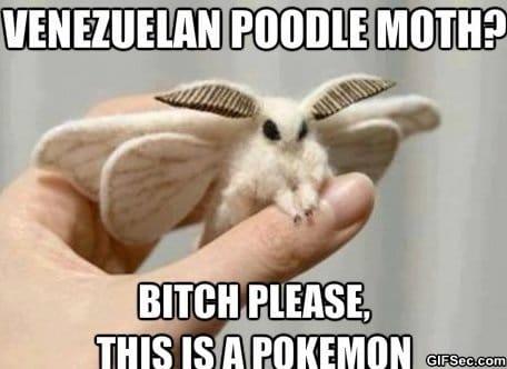 meme-pokemon