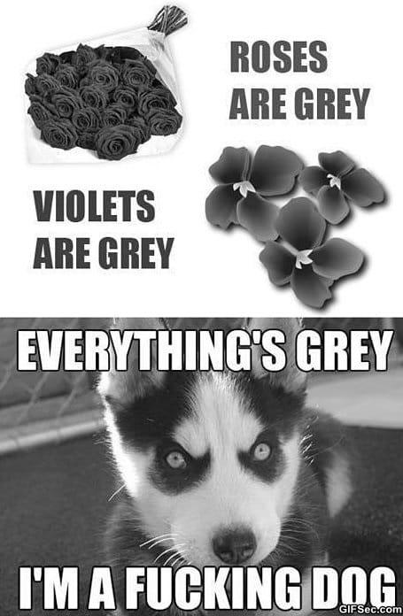 meme-roses-are-grey