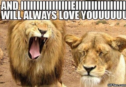 meme-singing-lion
