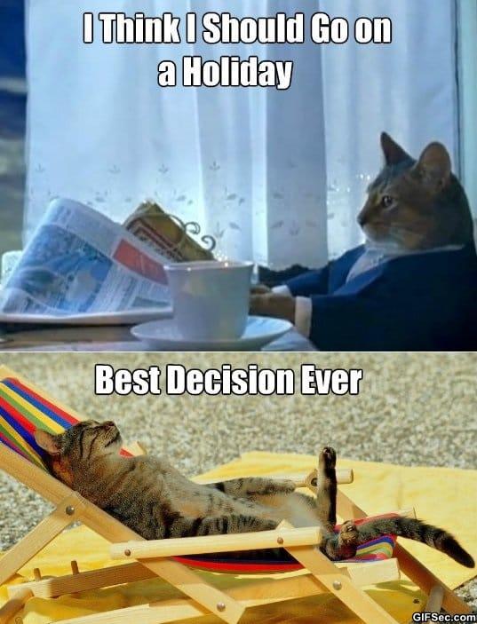 meme-sophisticated-cat