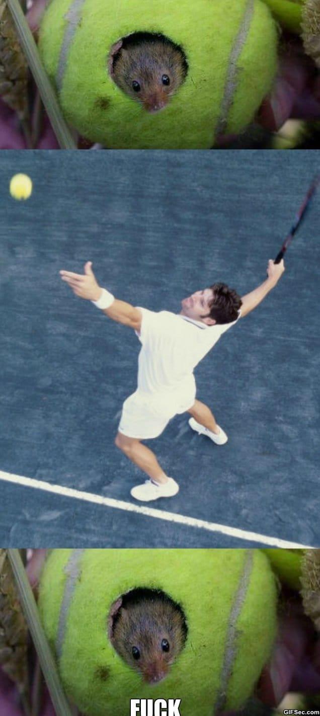 meme-tennis-mouse