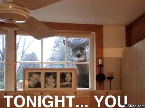 meme-tonight-you