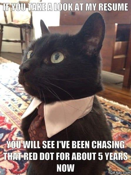 meme-unemployed-business-cat